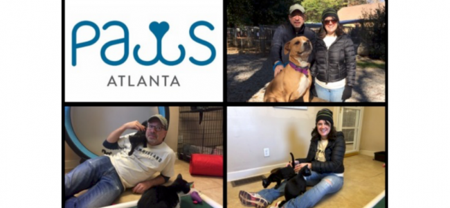 Brownieland Pictures Volunteers with PAWS Atlanta