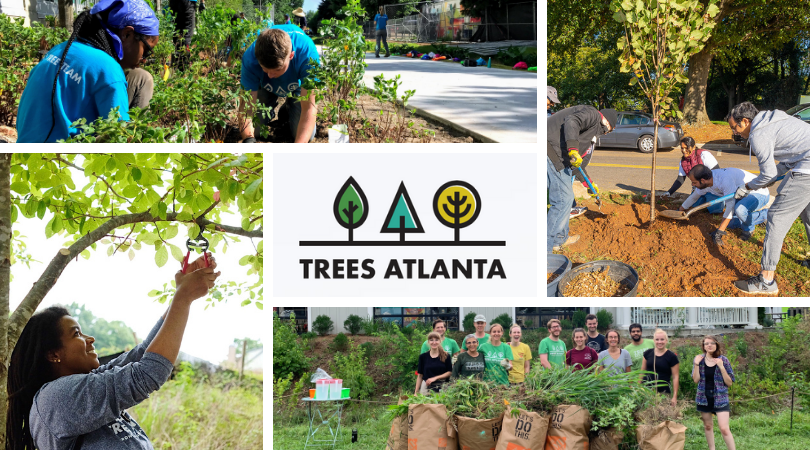 Brownieland Pictures features Guest Blog Post by Trees Atlanta in Celebration of Root Ball 2021